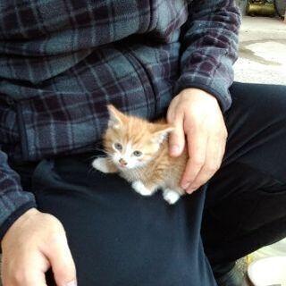 生後1ヶ月半の子猫もらっていただきました ありがとうございました。