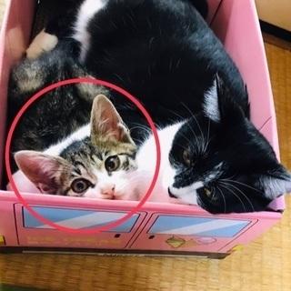 【里親募集】子猫♀を保護しました