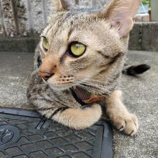 難病の猫ちゃんのお世話ボランティア募集!