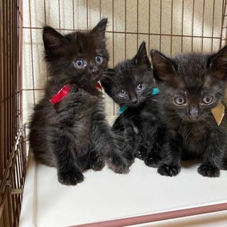 ふわふわくまさんのような黒猫さんとハチワレさん兄弟