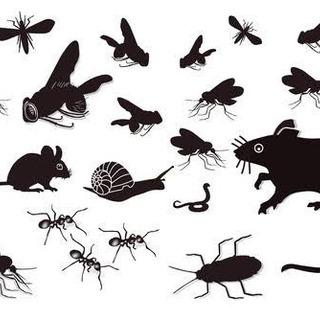 害虫、害獣の被害で困ってる方必見!