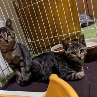 推定約4ヶ月の兄弟猫ちゃん(=^・・^=)