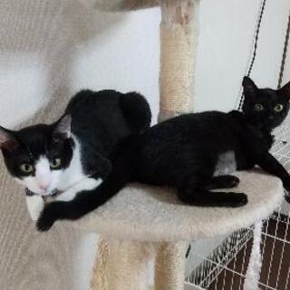 生後6ヶ月位の双子の子猫