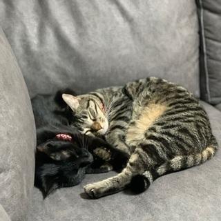 できれば2匹一緒に可愛がってくれる方😭 - 猫