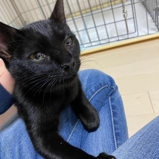 推定年齢1歳未満の黒猫