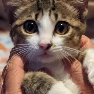 3ヶ月位オス猫