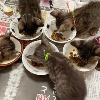 多頭飼育崩壊から来たキジ猫さん8匹
