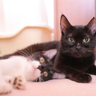 多頭飼育崩壊現場からの保護猫。人懐っこく可愛い!(*^^*)母性...