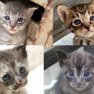 生後15日〜20日位の子猫ちゃん4匹里親募集中です!かわいい!