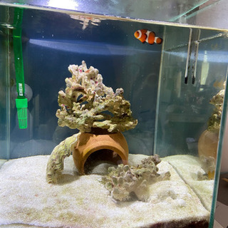 水槽+外部濾過+海水魚飼育用品セット+カクレクマノミ