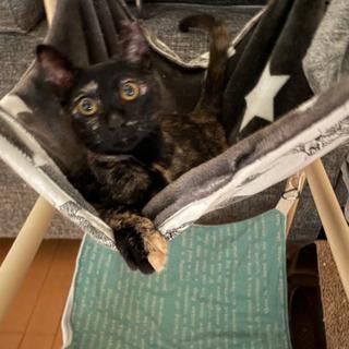 面白いサビ猫