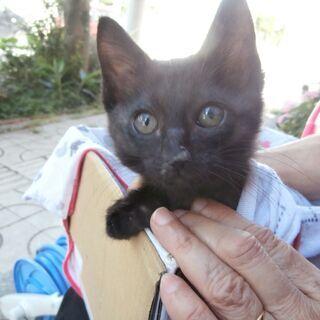 保護猫の里親さんになってくださーい