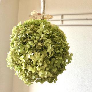アナベル紫陽花フライングボールリース