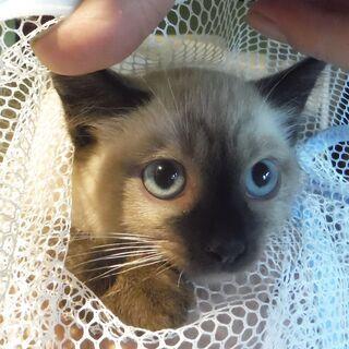 親子猫の里親を募集します