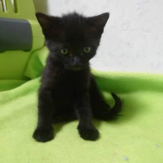 生後約1ヶ月の仔猫4匹