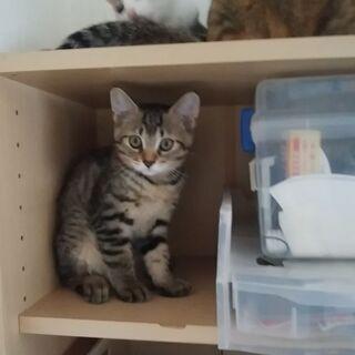 子猫3兄妹 里親募集