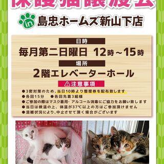 8月8日(日)おーあみ避難所譲渡会in新山下