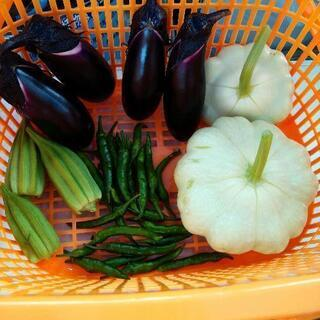 【農薬未使用】今収穫したお野菜。