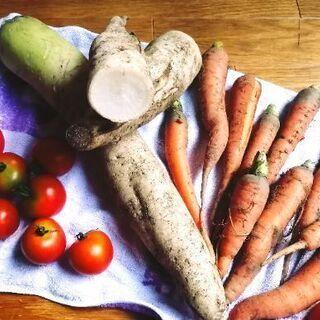 農薬不使用 ほぼ無肥料 大地と土の力だけで育った野生の野菜達!(...