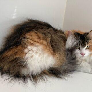 猫専門のサロン(美容室)トリマーさん、グルーマーさん スタッフ募集。
