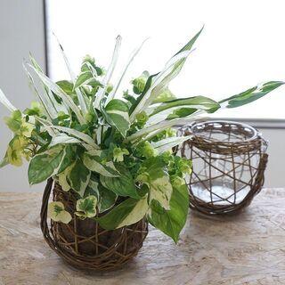 一日集中講座 観葉植物のプランツ・ギャザリング