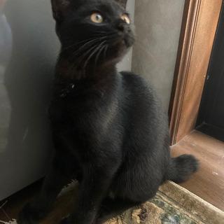 (再投稿)黒ネコちゃん 生後4か月