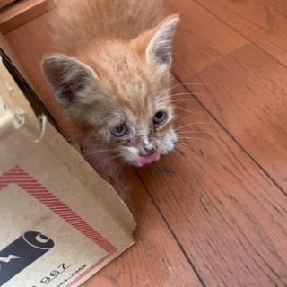子猫の飼い主さん募集します