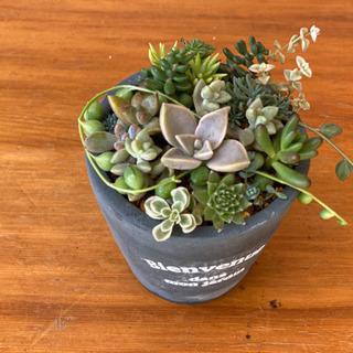 多肉植物の小さな寄せ植え②