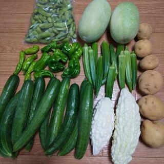 お野菜⑧点盛り