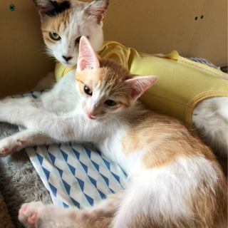 お母さん猫と子猫たちです