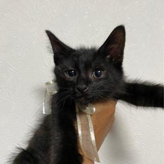 甘えたで性格が抜群に良い黒猫美人姉妹♡