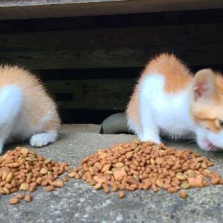 多頭飼崩壊の猫ちゃん達