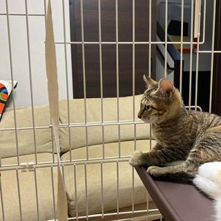 子猫2匹 1.5ヶ月