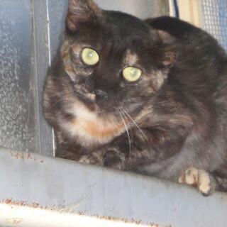 多頭飼い飼育で置き去りにされた猫2匹の里親募集 この子達を助けて...