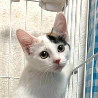 可愛いミケ猫です♪ − 愛知県
