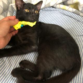 黒猫3きょうだい