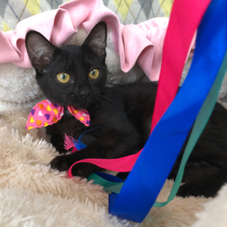 黒猫3きょうだい 3ヶ月