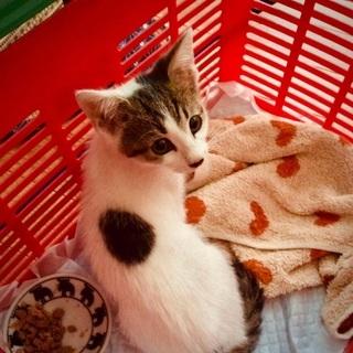 背中の円模様が素敵な2021年6月上旬生まれの仔猫ちゃん