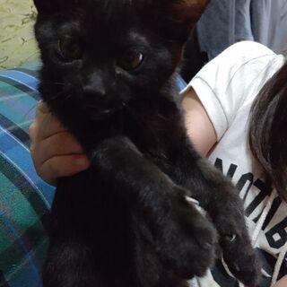 😸生後2ヶ月🐱クロ猫🐱メス🐱