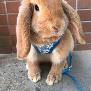 1歳半の女の子 うさぎ ウサギ