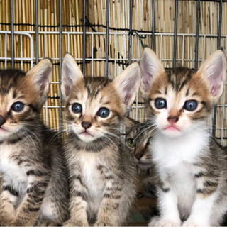 5匹の子猫ちゃんの里親募集
