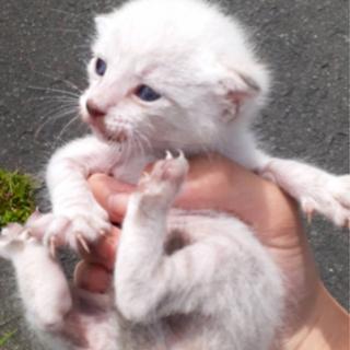 【里親募集】野良猫ちゃんを保護しました。