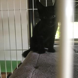 黒猫、女の子、ルイちゃんです。