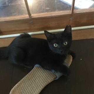 黒猫、短尻尾ロロちゃんです。