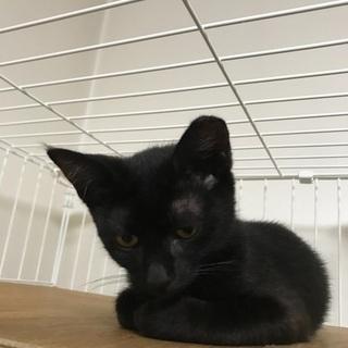 黒猫、美しい猫、ルナちゃんです。