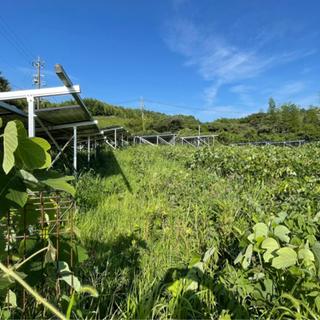 太陽光発電所の草刈りはいかがですか?