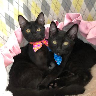 黒猫きょうだい3〜4ヶ月