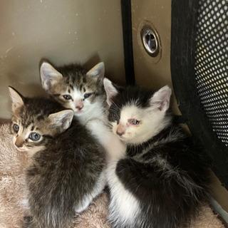 🐱生き残った仔猫の里親さん急募🐱 (折半:ワクチン&避妊去勢手術)