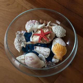 金魚鉢(直径約18cm×高さ約10cm )に貝殻付き