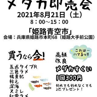 明日、8月21日(土)姫路青空市にて出店決定!メダカすくい&即売...